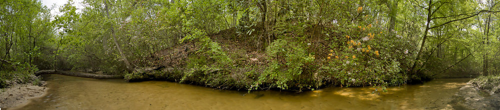 Panorama of Mountain Laurels on Creek