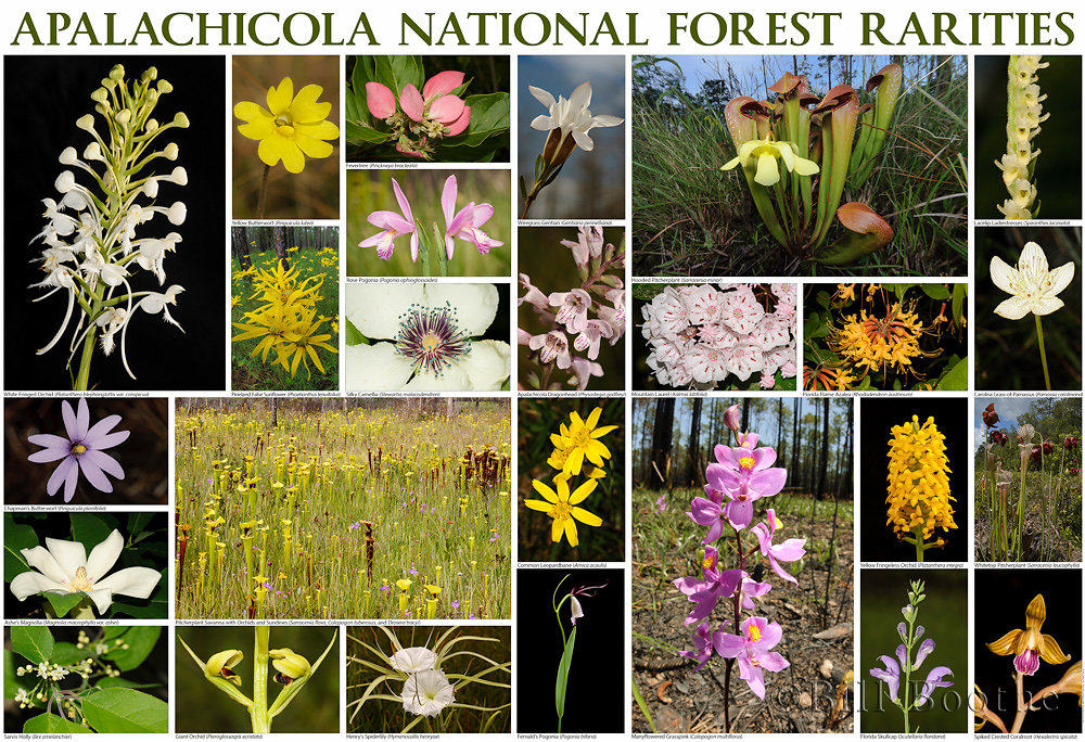 Apalachicola National Forest Rarities